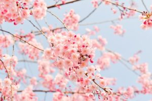 flowers- Healthy Chats for Tweens and Moms