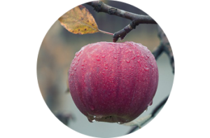 apple - Healthy Chats for Tweens and Moms