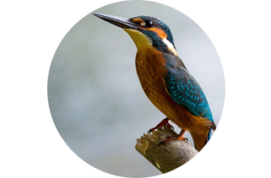 bird - Healthy Chats for Tweens and Moms