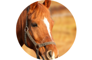 horse - Healthy Chats for Tweens and Moms