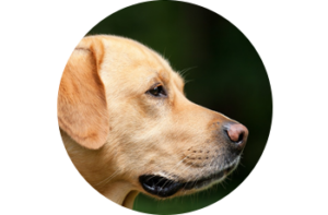 dog - Healthy Chats for Tweens and Moms
